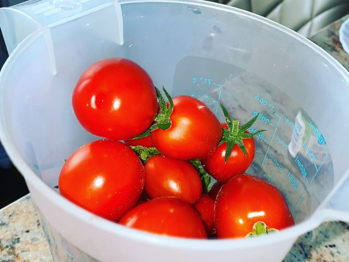 selbst gezüchtete Tomaten