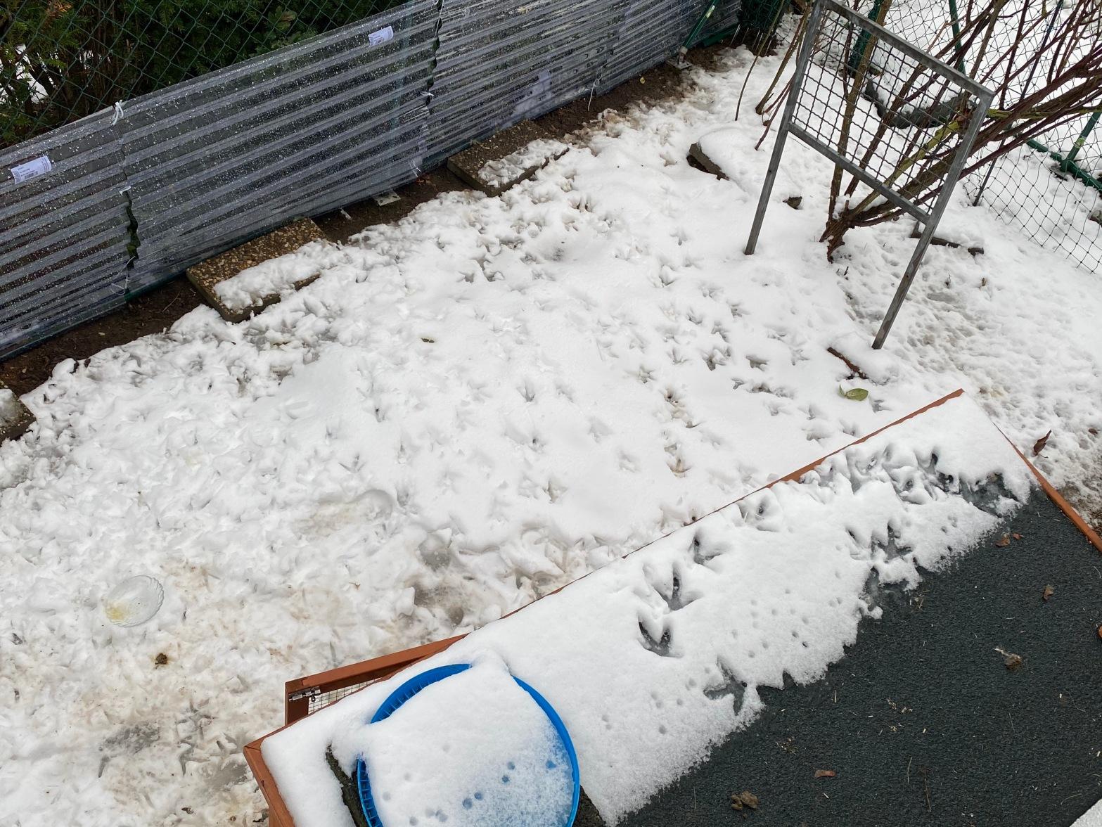 Hühnerspuren im Schnee